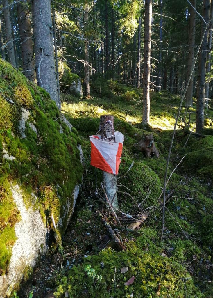 LapCI ry:n Tiina Sakomaan ottama kuva metsärastilta