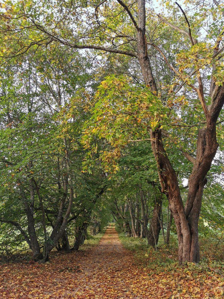 Kuva Päivölän metsästä