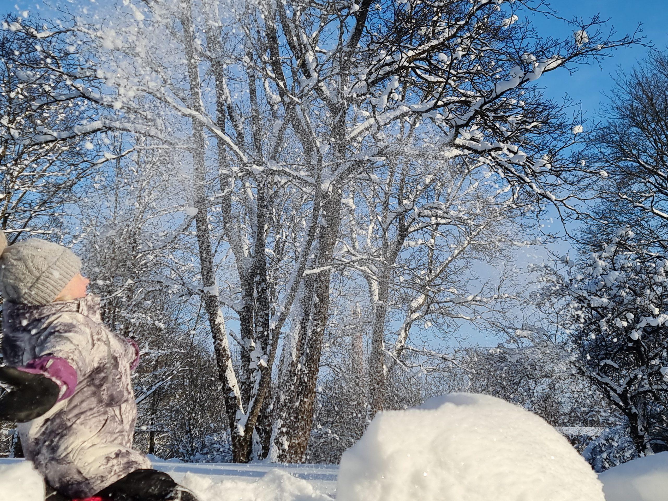 Lapsi pölläyttää lunta ilmaan, taustalla lumisia puita.